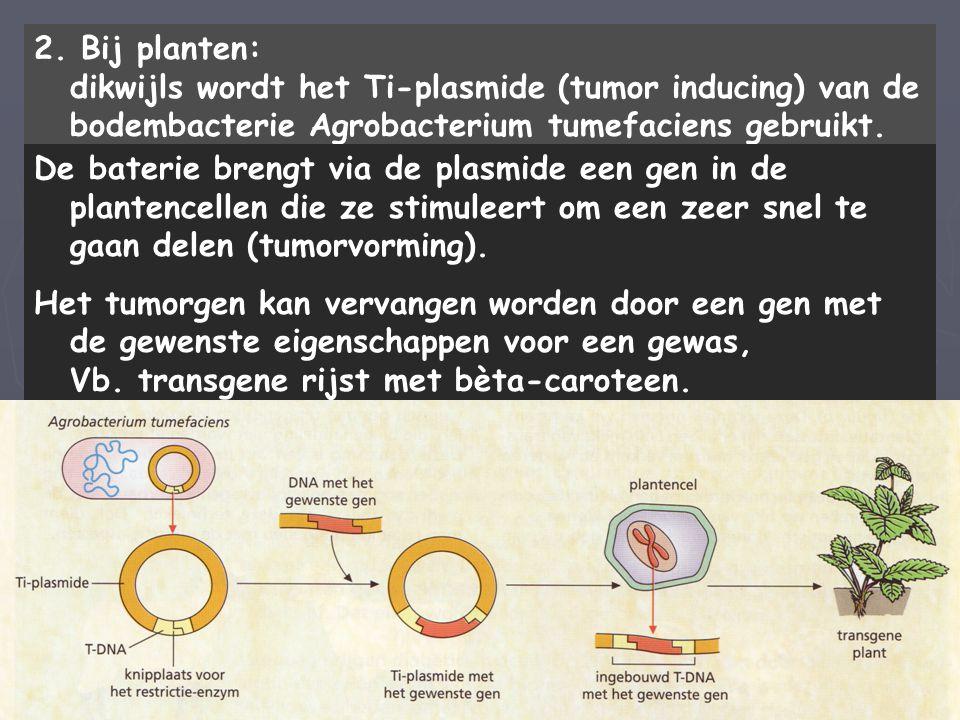2. Bij planten: dikwijls wordt het Ti-plasmide (tumor inducing) van de bodembacterie Agrobacterium tumefaciens gebruikt. De baterie brengt via de plas