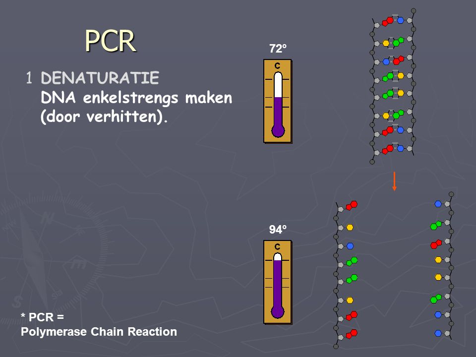 PCR 72° 94° 1DENATURATIE DNA enkelstrengs maken (door verhitten). * PCR = Polymerase Chain Reaction