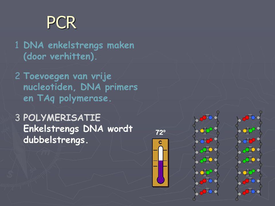 PCR 1DNA enkelstrengs maken (door verhitten). 2Toevoegen van vrije nucleotiden, DNA primers en TAq polymerase. 3POLYMERISATIE Enkelstrengs DNA wordt d