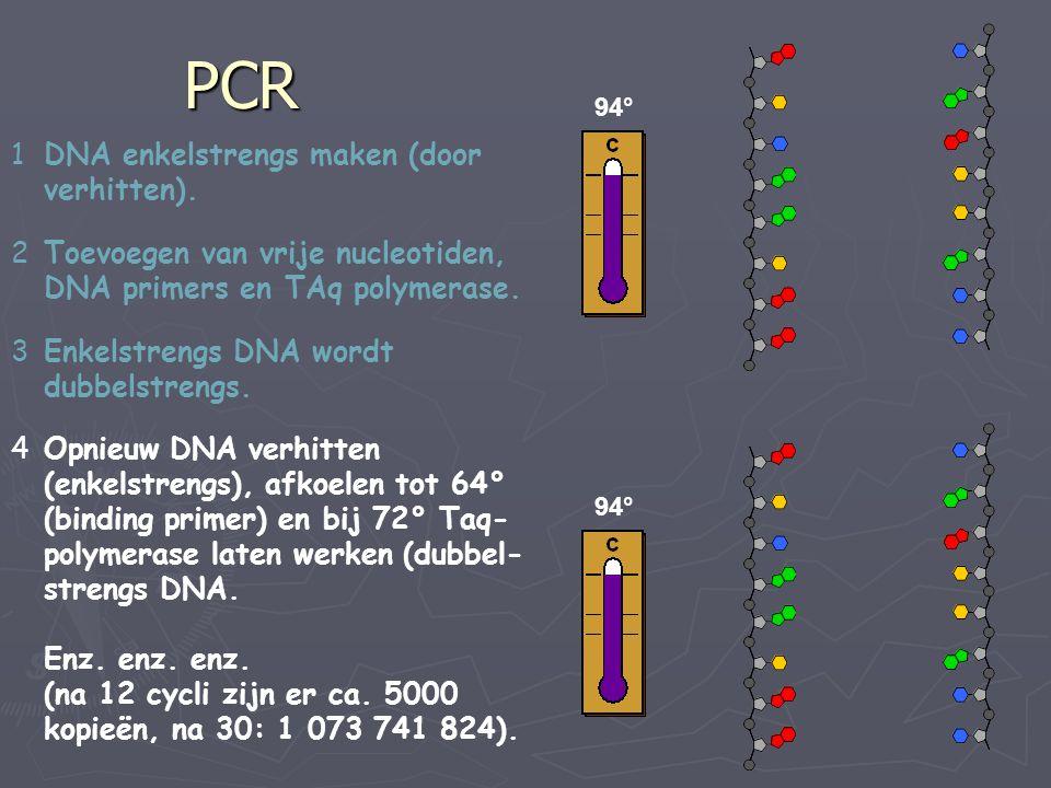 PCR 1DNA enkelstrengs maken (door verhitten). 2Toevoegen van vrije nucleotiden, DNA primers en TAq polymerase. 3Enkelstrengs DNA wordt dubbelstrengs.