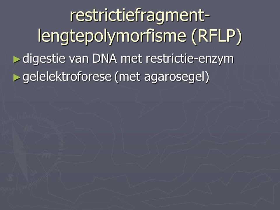 restrictiefragment- lengtepolymorfisme (RFLP) ► digestie van DNA met restrictie-enzym ► gelelektroforese (met agarosegel)
