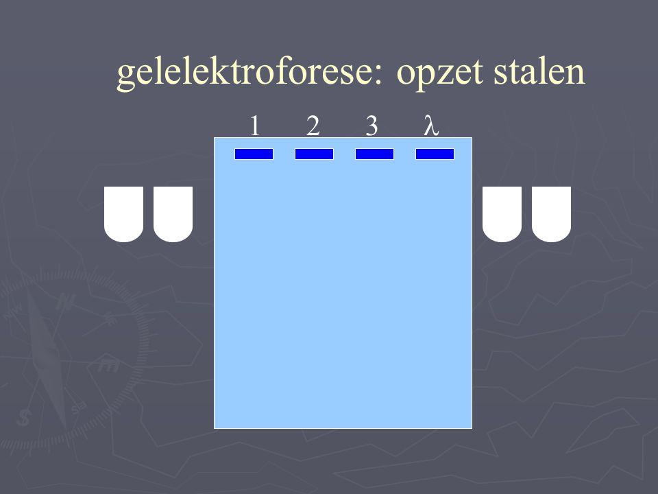 gelelektroforese: opzet stalen 1 2 3