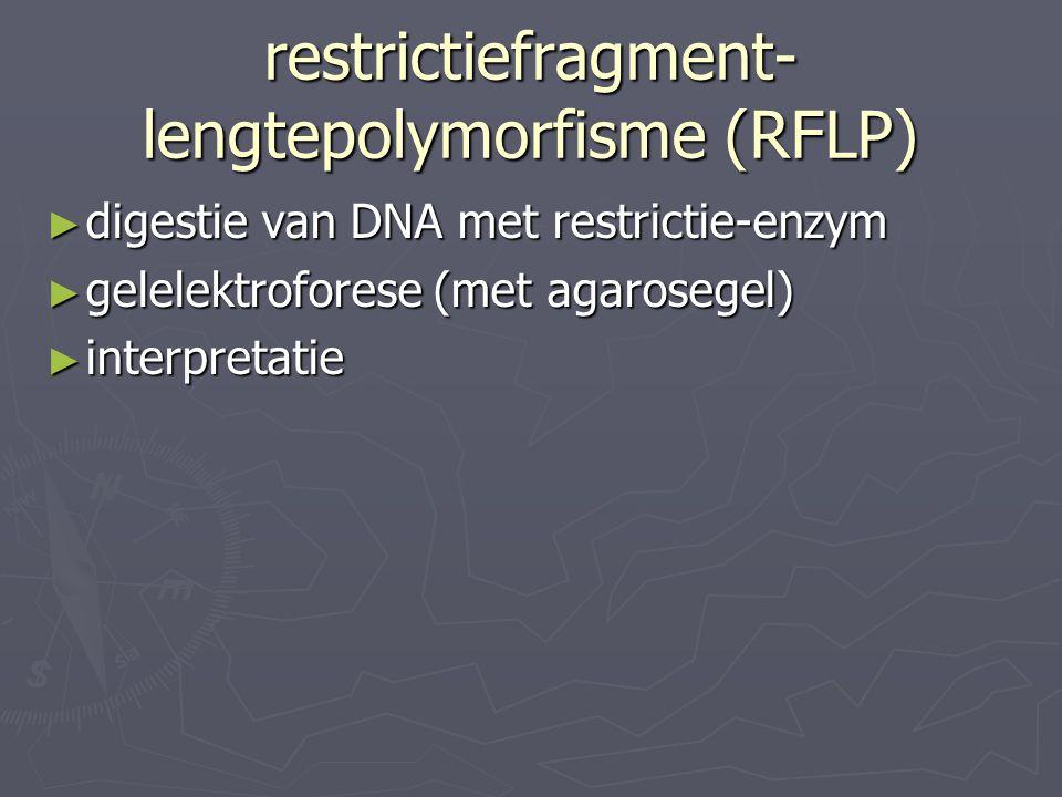 restrictiefragment- lengtepolymorfisme (RFLP) ► digestie van DNA met restrictie-enzym ► gelelektroforese (met agarosegel) ► interpretatie