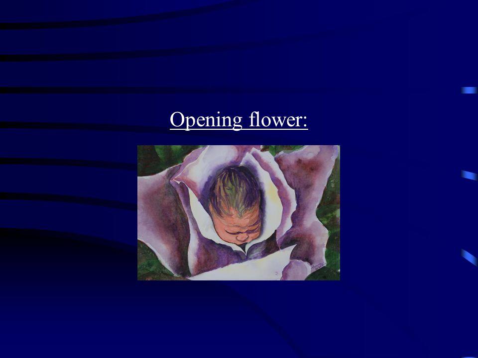 Opening flower:
