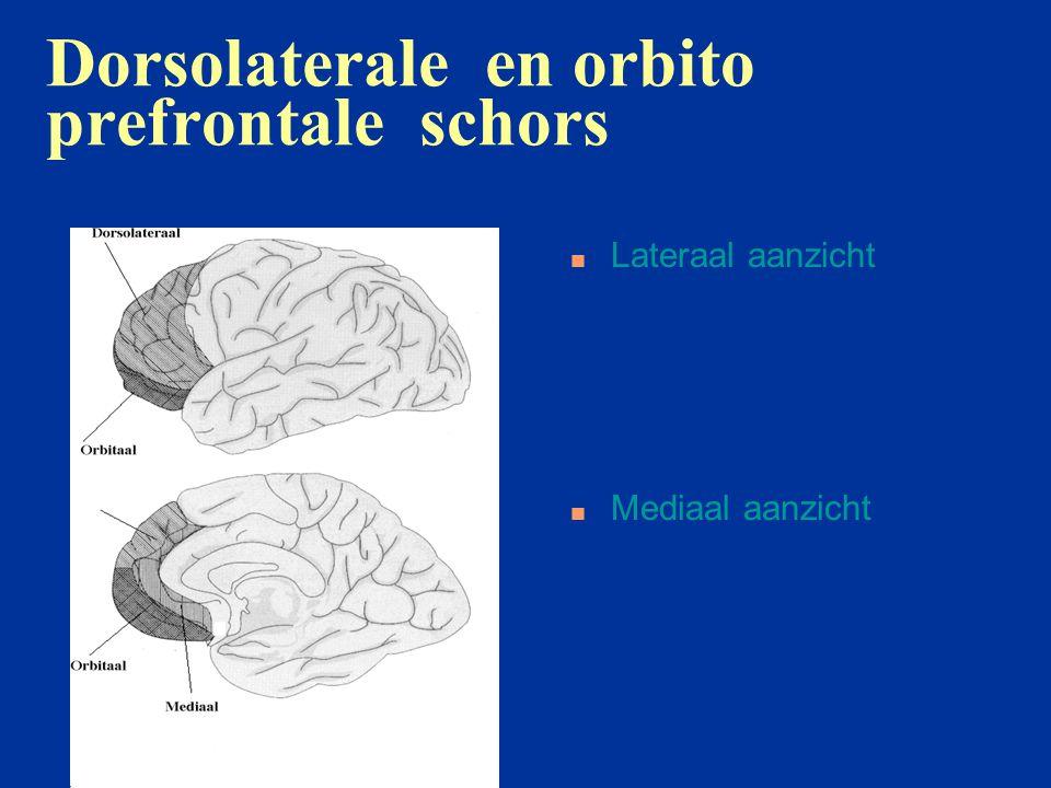 Dorslolaterale prefrontale schors: posterieure connecties