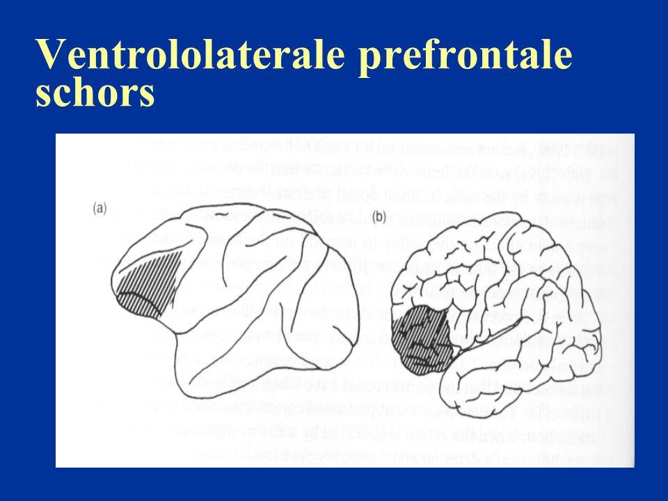 Ventrolaterale prefrontale schors: posterieure connecties