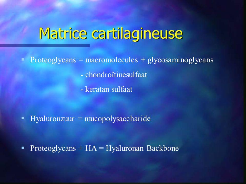 Matrice cartilagineuse   Proteoglycans = macromolecules + glycosaminoglycans - chondroïtinesulfaat - keratan sulfaat   Hyaluronzuur = mucopolysaccharide   Proteoglycans + HA = Hyaluronan Backbone