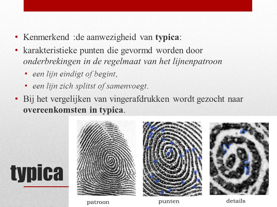typica Kenmerkend :de aanwezigheid van typica: karakteristieke punten die gevormd worden door onderbrekingen in de regelmaat van het lijnenpatroon een lijn eindigt of begint, een lijn zich splitst of samenvoegt.