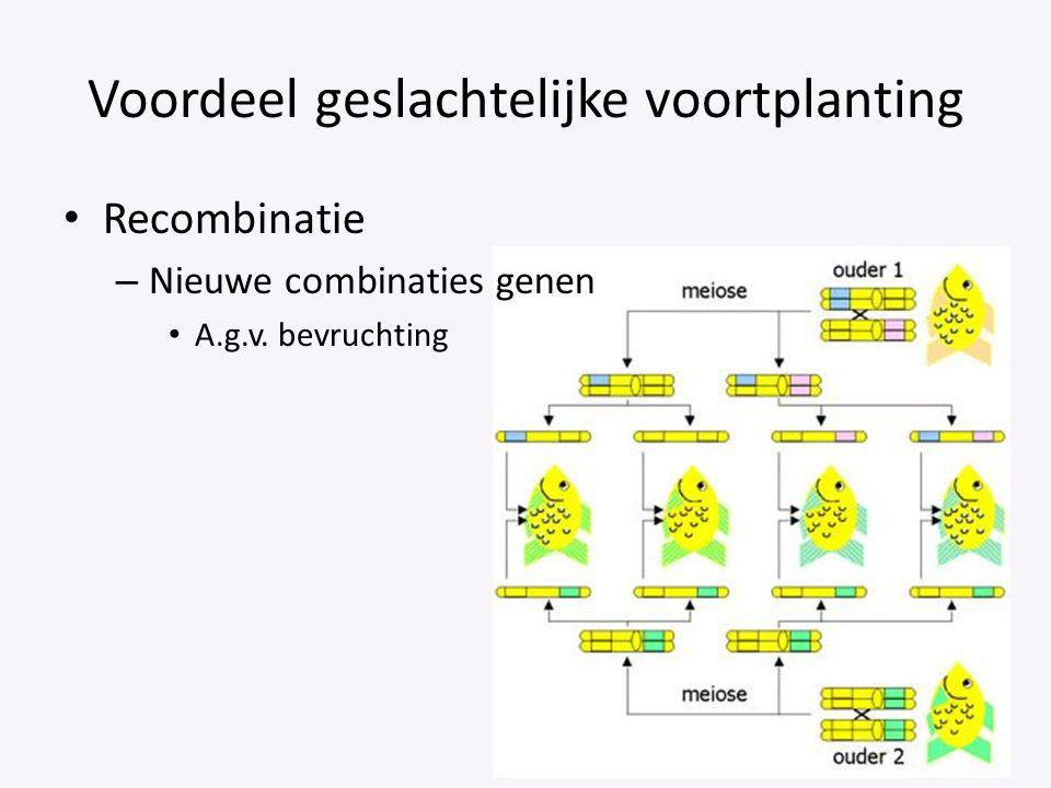 Voordeel geslachtelijke voortplanting Recombinatie – Nieuwe combinaties genen A.g.v. bevruchting