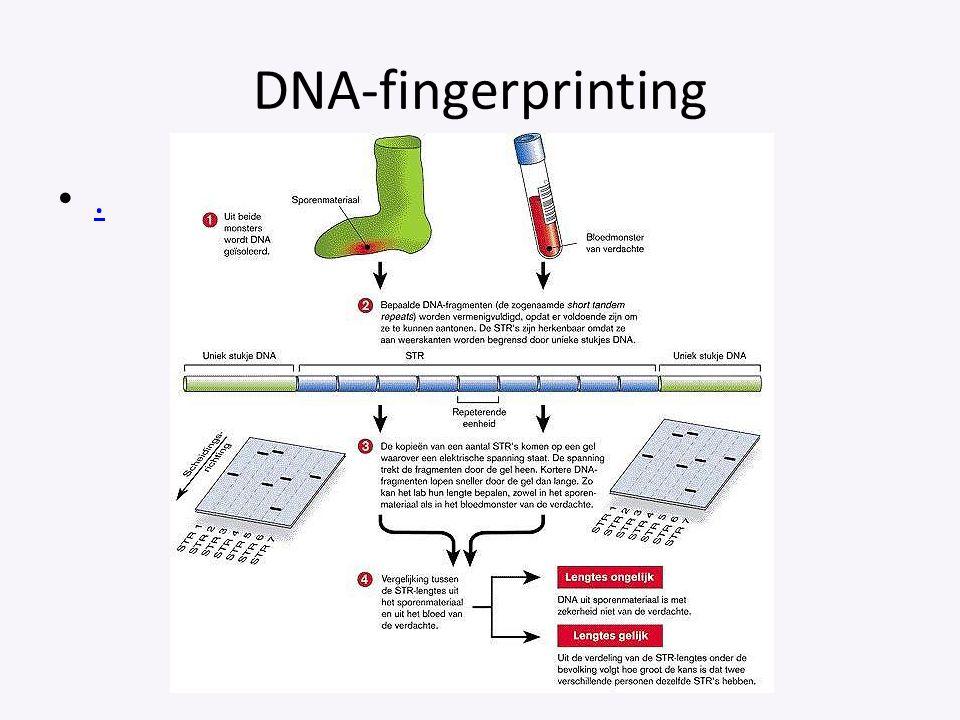 DNA-fingerprinting.