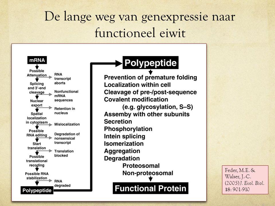 De lange weg van genexpressie naar functioneel eiwit Feder, M.E.
