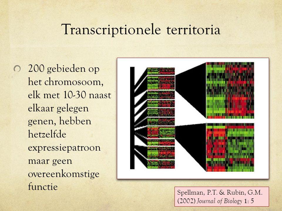 Transcriptionele territoria 200 gebieden op het chromosoom, elk met 10-30 naast elkaar gelegen genen, hebben hetzelfde expressiepatroon maar geen overeenkomstige functie Spellman, P.T.