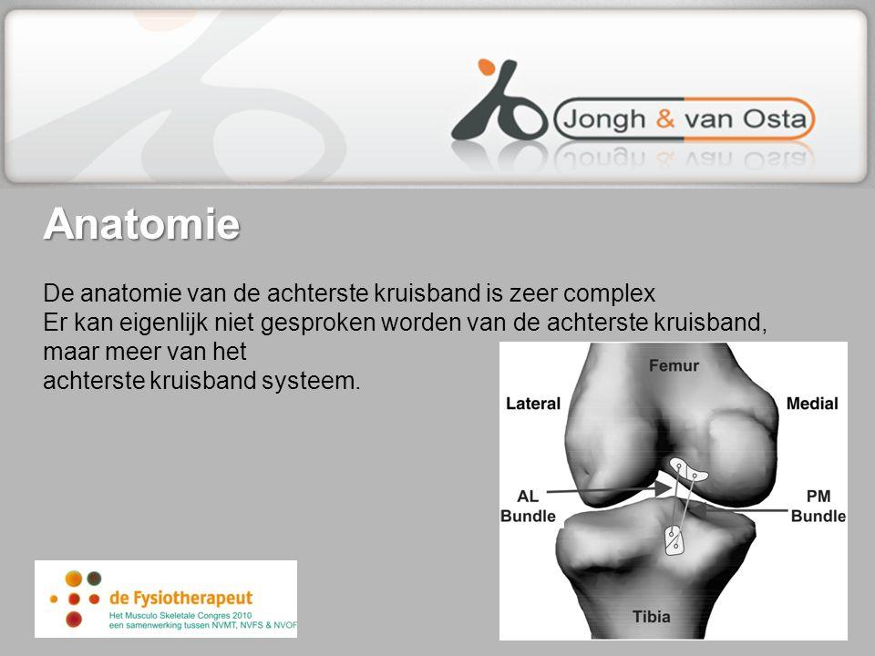 Anatomie Anatomie De anatomie van de achterste kruisband is zeer complex Er kan eigenlijk niet gesproken worden van de achterste kruisband, maar meer
