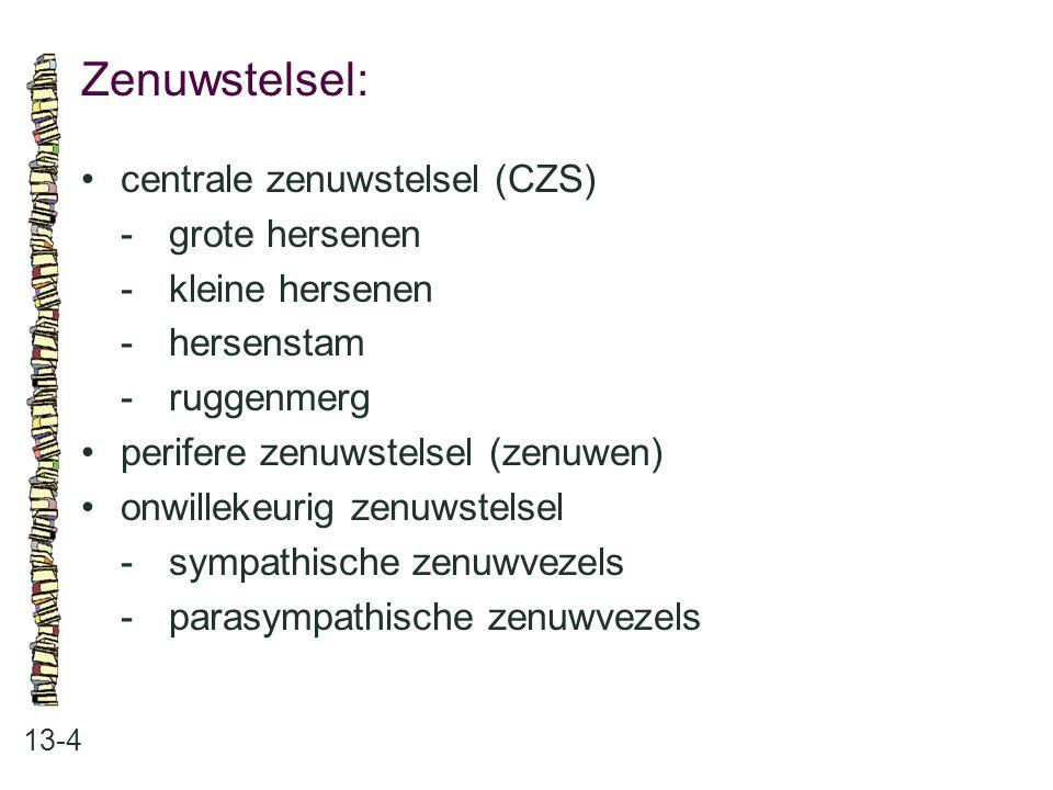 Zenuwstelsel: 13-4 centrale zenuwstelsel (CZS) -grote hersenen -kleine hersenen -hersenstam -ruggenmerg perifere zenuwstelsel (zenuwen) onwillekeurig
