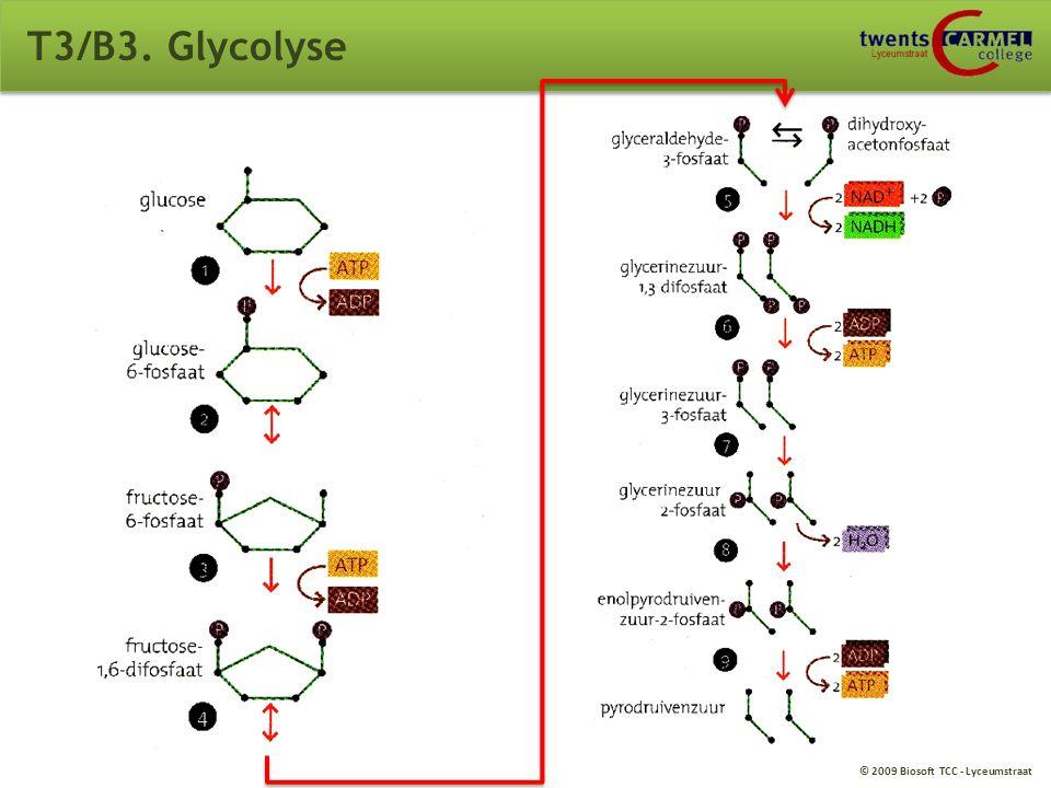 © 2009 Biosoft TCC - Lyceumstraat T3/B3. Aërobe dissimilatie van glucose Opdracht: Benoem de delen. 1: Kernlichaampje 2: Kernmembraan 3: Ribosomen 4: