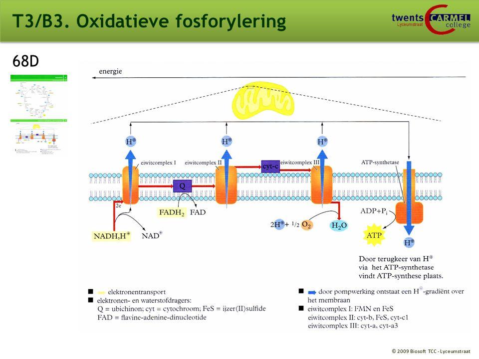 © 2009 Biosoft TCC - Lyceumstraat T3/B3. Oxidatieve fosforylering
