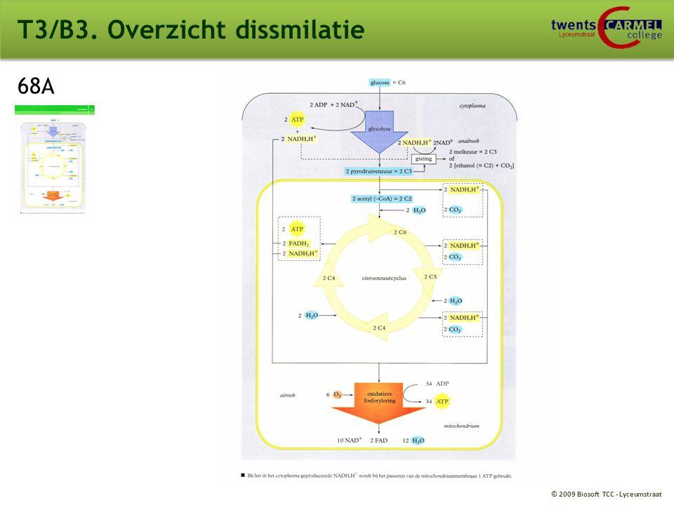© 2009 Biosoft TCC - Lyceumstraat T3/B3. Energieopbrengst 1 glucose molecuul