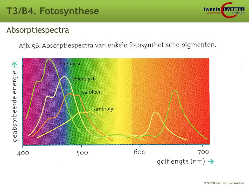 © 2009 Biosoft TCC - Lyceumstraat Absorptiespectra T3/B4. Fotosynthese