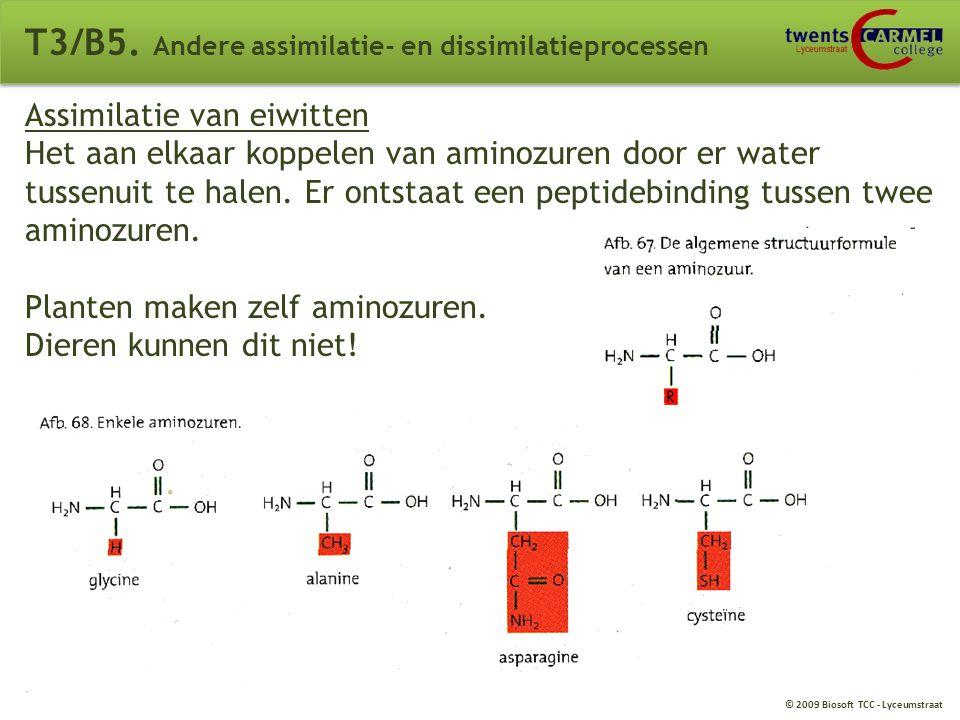 © 2009 Biosoft TCC - Lyceumstraat T3/B5. Andere assimilatie- en dissimilatieprocessen Assimilatie van koolhydraten Aan elkaar plakken van kleine bouws