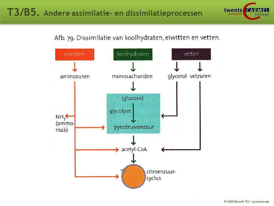 © 2009 Biosoft TCC - Lyceumstraat T3/B5. Andere assimilatie- en dissimilatieprocessen Eiwitturnover