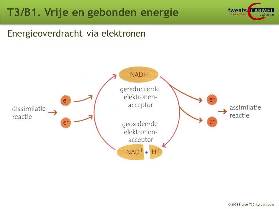 © 2009 Biosoft TCC - Lyceumstraat T3/B1. Vrije en gebonden energie Energierijke elektronen Moleculen: elektronen (negatief geladen) protonen (positief