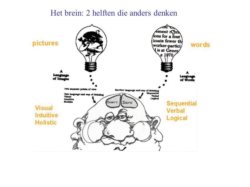 Het brein: 2 helften die anders denken