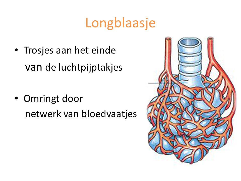 Longblaasje Trosjes aan het einde van de luchtpijptakjes Omringt door netwerk van bloedvaatjes