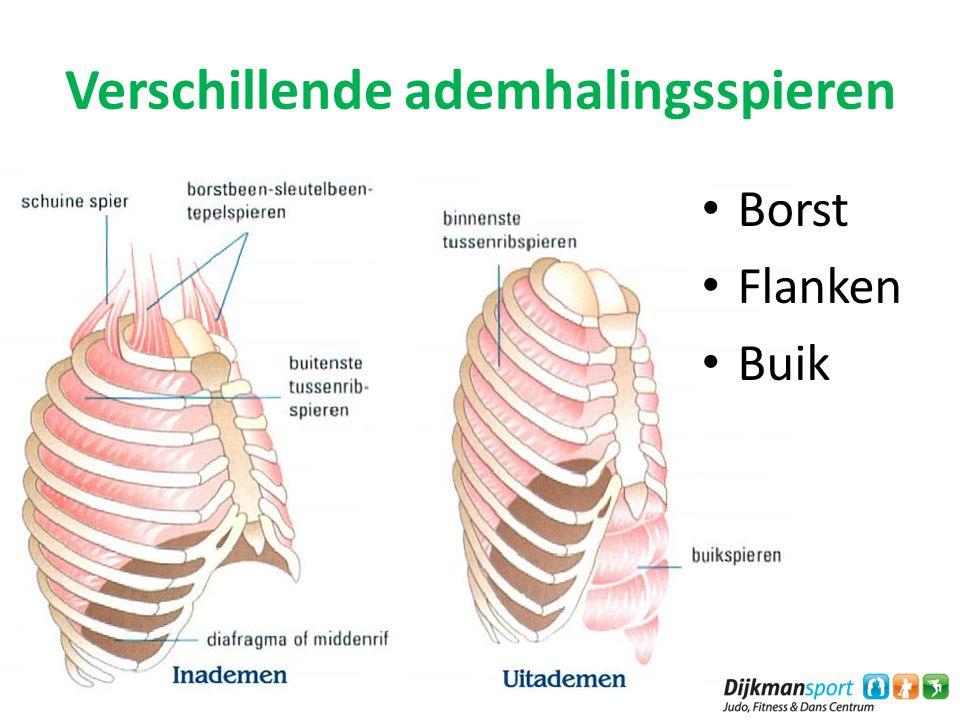 Verschillende ademhalingsspieren Borst Flanken Buik