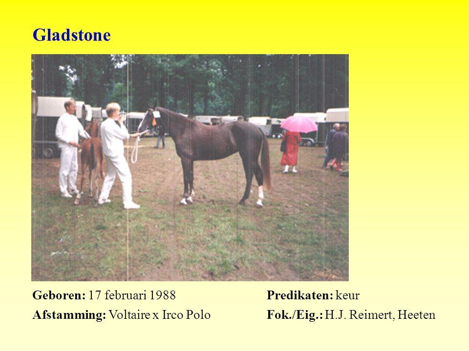 Gladstone Geboren: 17 februari 1988Predikaten: keur Afstamming: Voltaire x Irco PoloFok./Eig.: H.J.