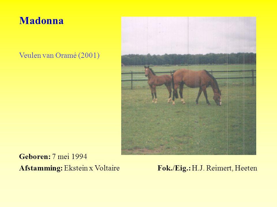 Madonna Veulen van Oramé (2001) Geboren: 7 mei 1994 Afstamming: Ekstein x VoltaireFok./Eig.: H.J.