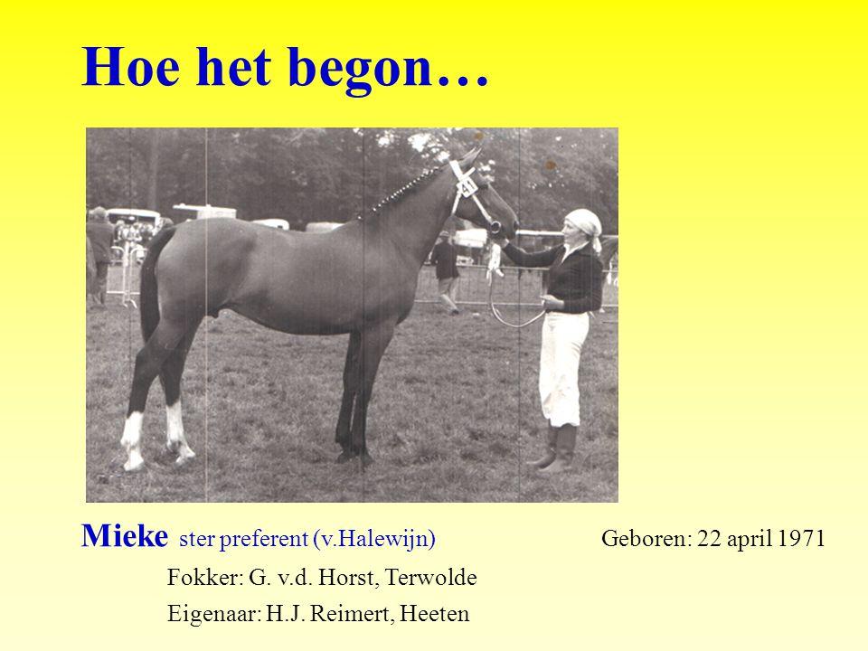 Hoe het begon… Mieke ster preferent (v.Halewijn) Geboren: 22 april 1971 Fokker: G.