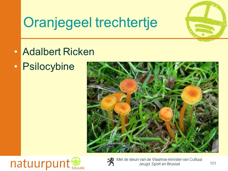 Met de steun van de Vlaamse minister van Cultuur, Jeugd, Sport en Brussel 101 Oranjegeel trechtertje Adalbert Ricken Psilocybine