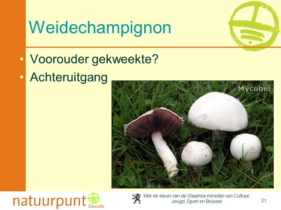 Met de steun van de Vlaamse minister van Cultuur, Jeugd, Sport en Brussel 21 Weidechampignon Voorouder gekweekte? Achteruitgang