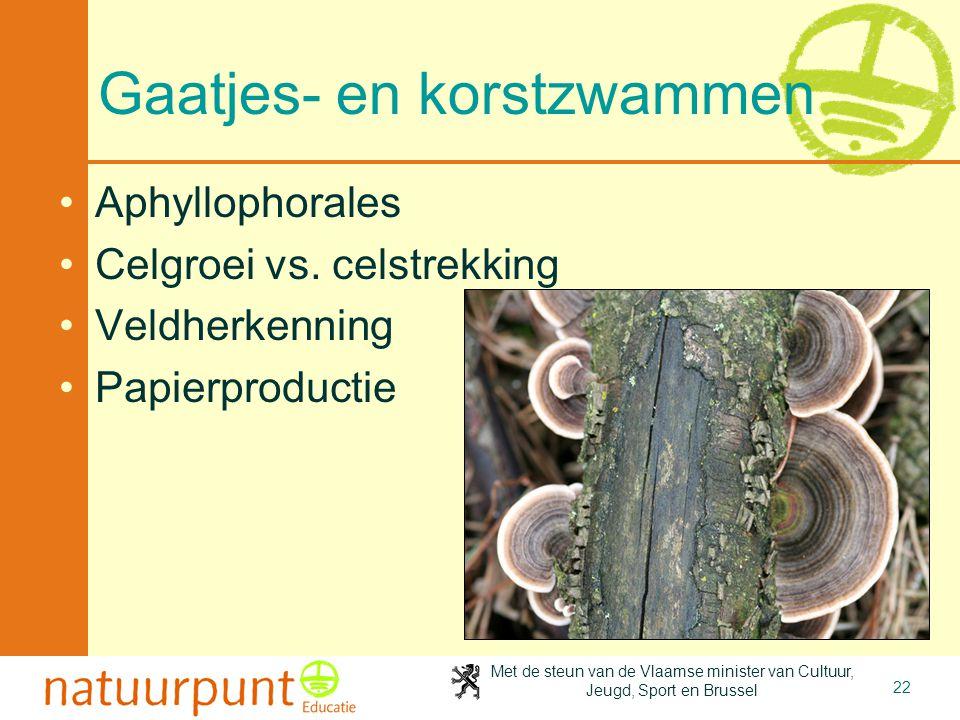 Met de steun van de Vlaamse minister van Cultuur, Jeugd, Sport en Brussel 22 Gaatjes- en korstzwammen Aphyllophorales Celgroei vs. celstrekking Veldhe