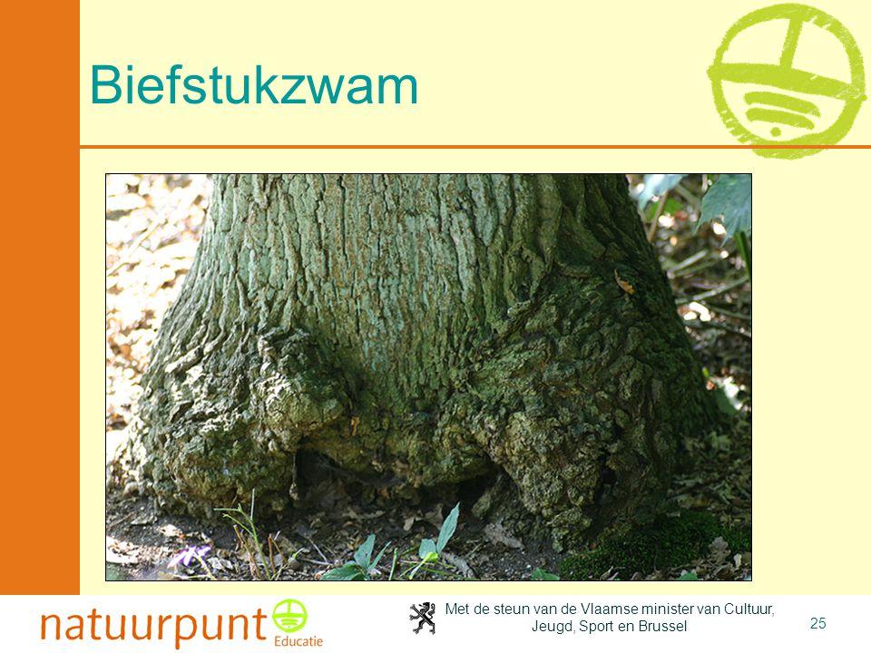 Met de steun van de Vlaamse minister van Cultuur, Jeugd, Sport en Brussel 25 Biefstukzwam