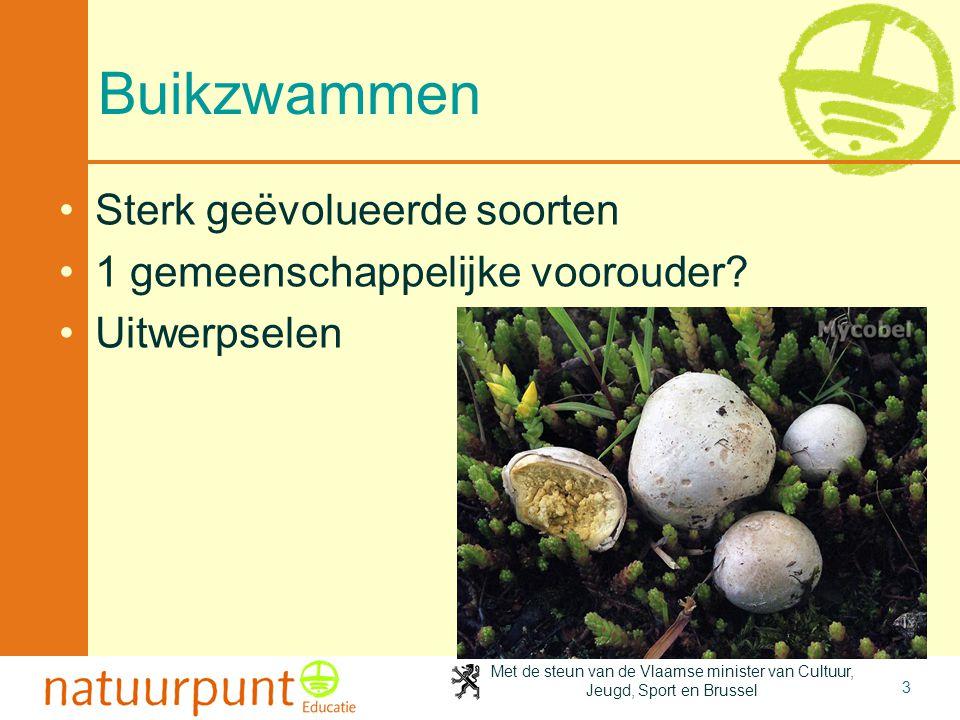 Met de steun van de Vlaamse minister van Cultuur, Jeugd, Sport en Brussel 3 Buikzwammen Sterk geëvolueerde soorten 1 gemeenschappelijke voorouder.