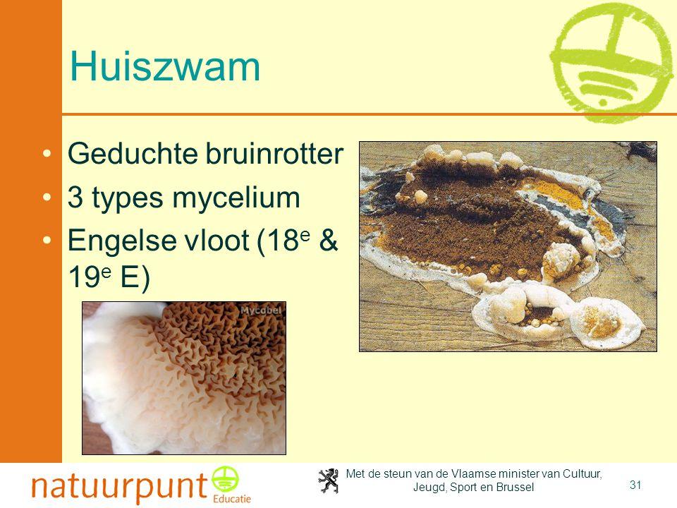 Met de steun van de Vlaamse minister van Cultuur, Jeugd, Sport en Brussel 31 Huiszwam Geduchte bruinrotter 3 types mycelium Engelse vloot (18 e & 19 e E)