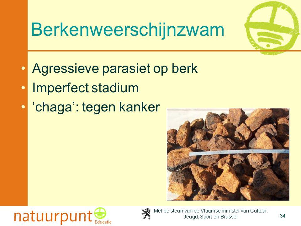 Met de steun van de Vlaamse minister van Cultuur, Jeugd, Sport en Brussel 34 Berkenweerschijnzwam Agressieve parasiet op berk Imperfect stadium 'chaga': tegen kanker