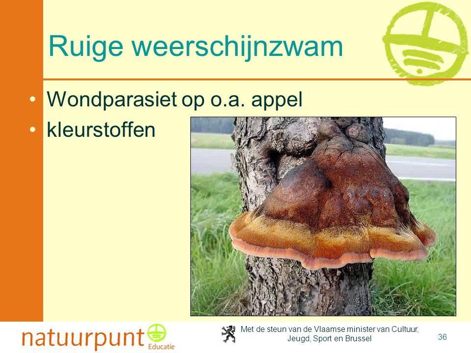 Met de steun van de Vlaamse minister van Cultuur, Jeugd, Sport en Brussel 36 Ruige weerschijnzwam Wondparasiet op o.a. appel kleurstoffen