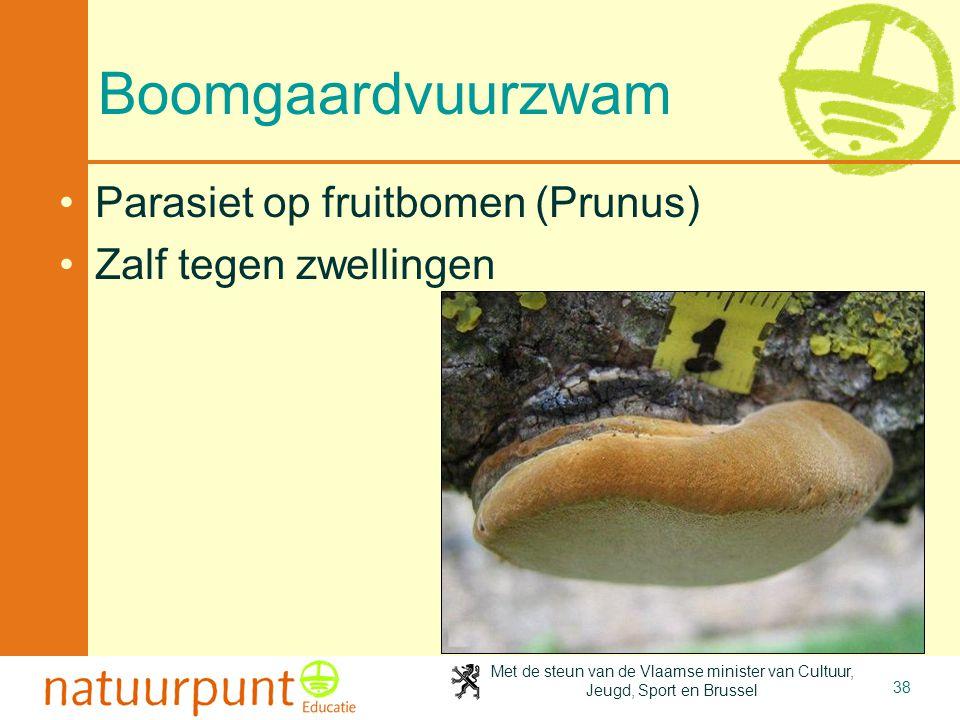 Met de steun van de Vlaamse minister van Cultuur, Jeugd, Sport en Brussel 38 Boomgaardvuurzwam Parasiet op fruitbomen (Prunus) Zalf tegen zwellingen
