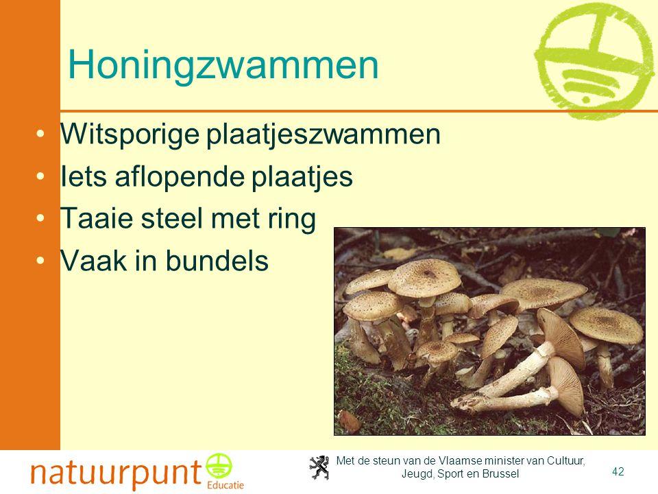 Met de steun van de Vlaamse minister van Cultuur, Jeugd, Sport en Brussel 42 Honingzwammen Witsporige plaatjeszwammen Iets aflopende plaatjes Taaie steel met ring Vaak in bundels