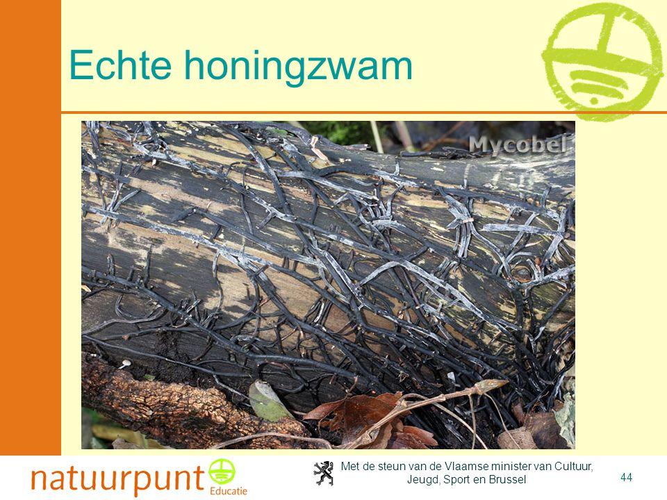 Met de steun van de Vlaamse minister van Cultuur, Jeugd, Sport en Brussel 44 Echte honingzwam