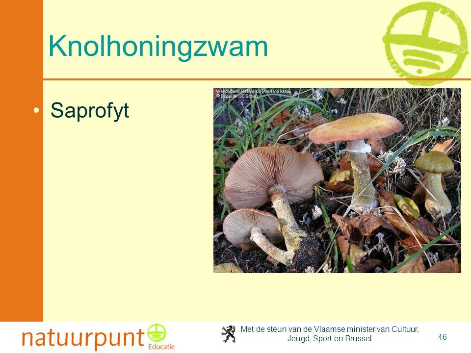 Met de steun van de Vlaamse minister van Cultuur, Jeugd, Sport en Brussel 46 Knolhoningzwam Saprofyt