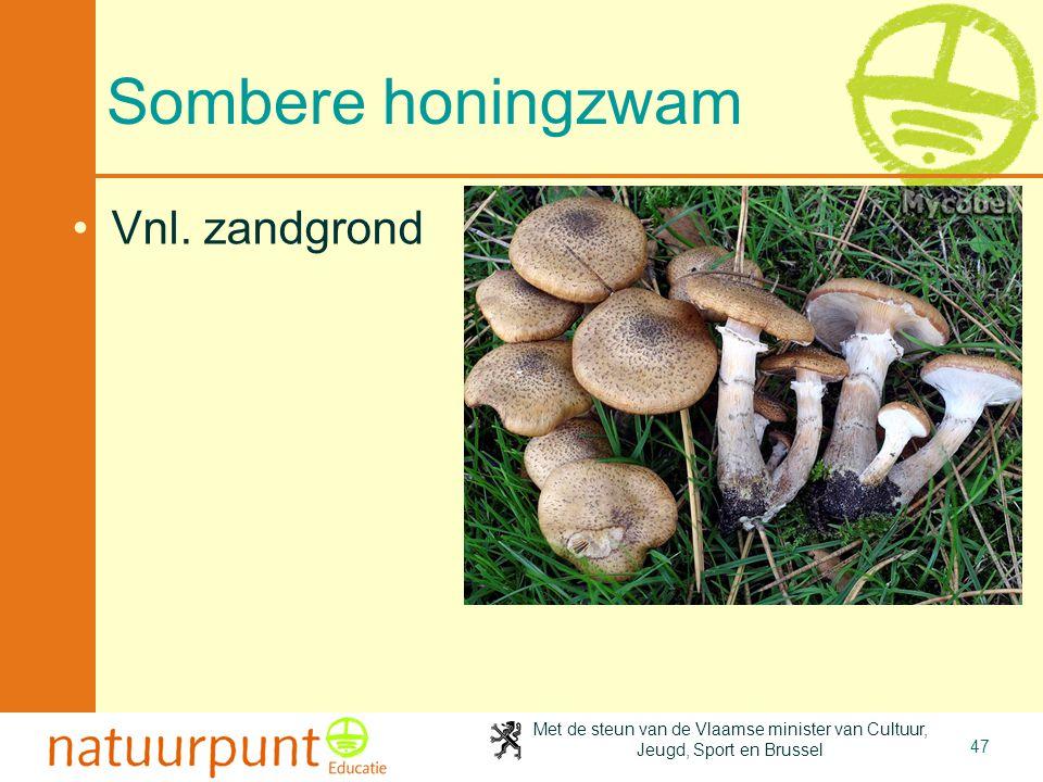Met de steun van de Vlaamse minister van Cultuur, Jeugd, Sport en Brussel 47 Sombere honingzwam Vnl. zandgrond
