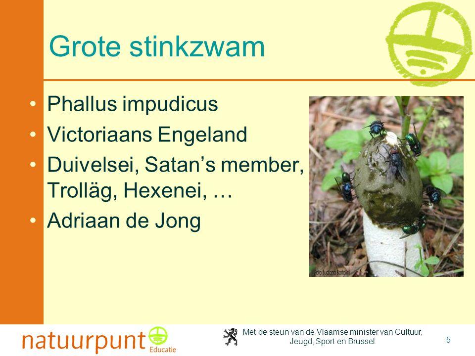 Met de steun van de Vlaamse minister van Cultuur, Jeugd, Sport en Brussel 5 Grote stinkzwam Phallus impudicus Victoriaans Engeland Duivelsei, Satan's