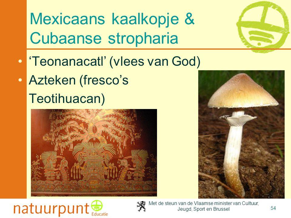 Met de steun van de Vlaamse minister van Cultuur, Jeugd, Sport en Brussel 54 Mexicaans kaalkopje & Cubaanse stropharia 'Teonanacatl' (vlees van God) Azteken (fresco's Teotihuacan)