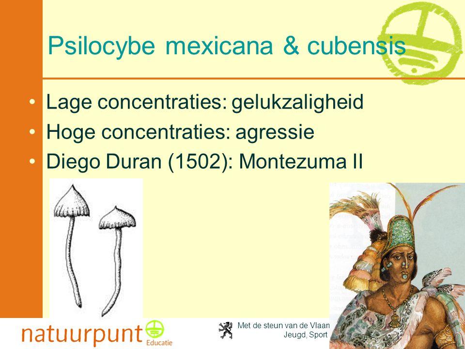 Met de steun van de Vlaamse minister van Cultuur, Jeugd, Sport en Brussel 55 Psilocybe mexicana & cubensis Lage concentraties: gelukzaligheid Hoge concentraties: agressie Diego Duran (1502): Montezuma II