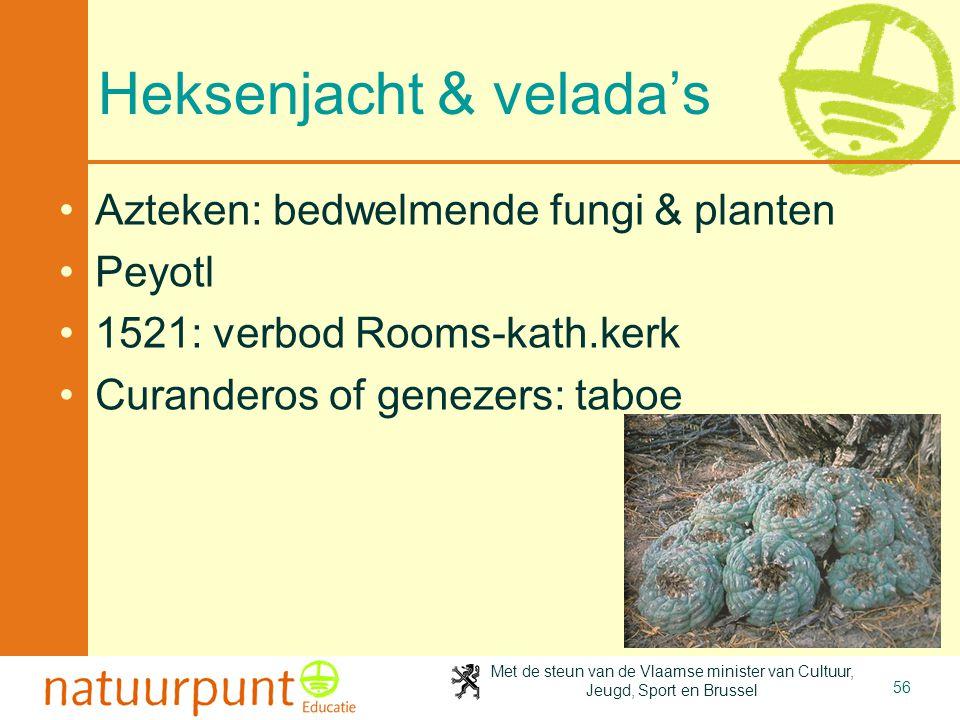 Met de steun van de Vlaamse minister van Cultuur, Jeugd, Sport en Brussel 56 Heksenjacht & velada's Azteken: bedwelmende fungi & planten Peyotl 1521: