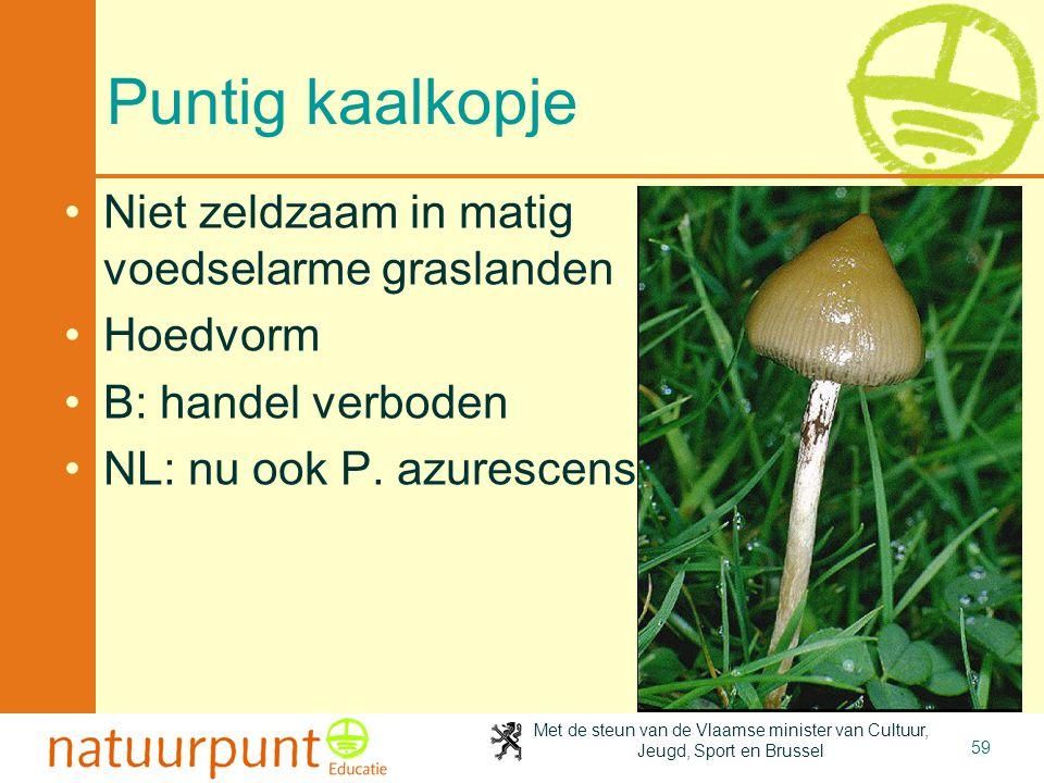 Met de steun van de Vlaamse minister van Cultuur, Jeugd, Sport en Brussel 59 Puntig kaalkopje Niet zeldzaam in matig voedselarme graslanden Hoedvorm B: handel verboden NL: nu ook P.
