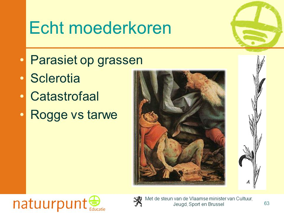 Met de steun van de Vlaamse minister van Cultuur, Jeugd, Sport en Brussel 63 Echt moederkoren Parasiet op grassen Sclerotia Catastrofaal Rogge vs tarwe